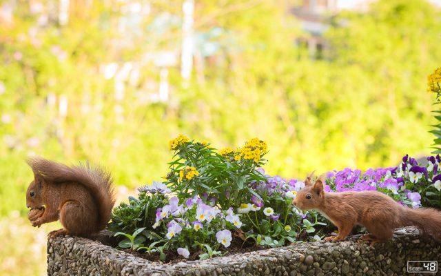 April 2019 - zusammen im Blumenkasten - ein seltenes Bild